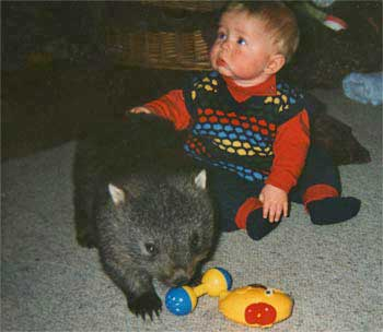 Rubin &#038; Wombat